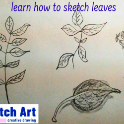 Learn How to Sketch leaves